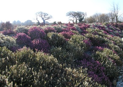 Planting – St Austell